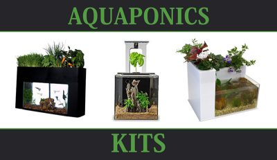 The best Aquaponics Kits on the market today