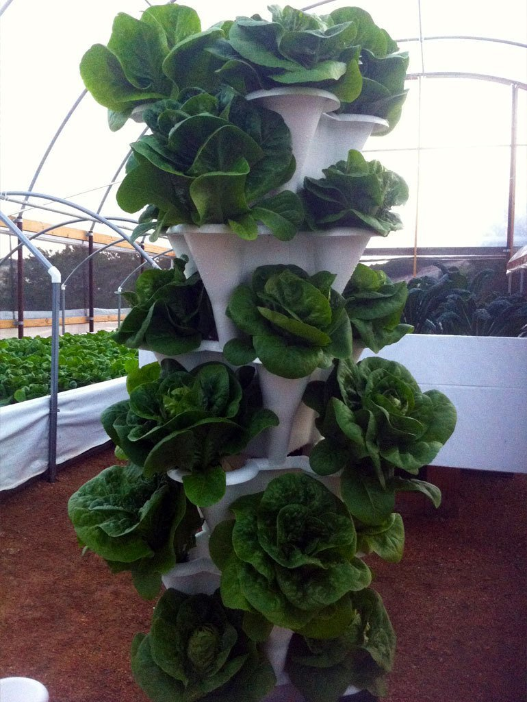 outdoor hydroponics tower with lettuce growing