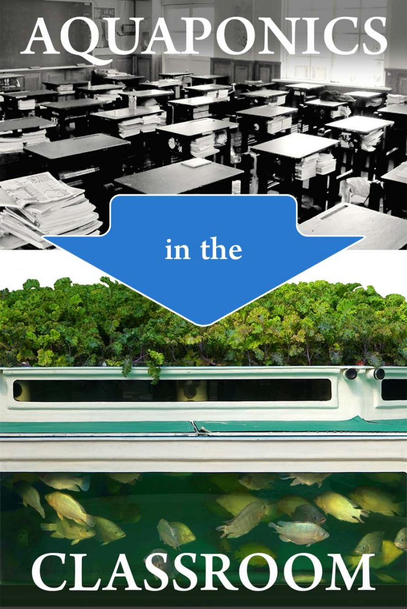 Should we teach Aquaponics in Schools?