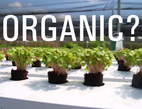Hydroponics, Organic or Not?