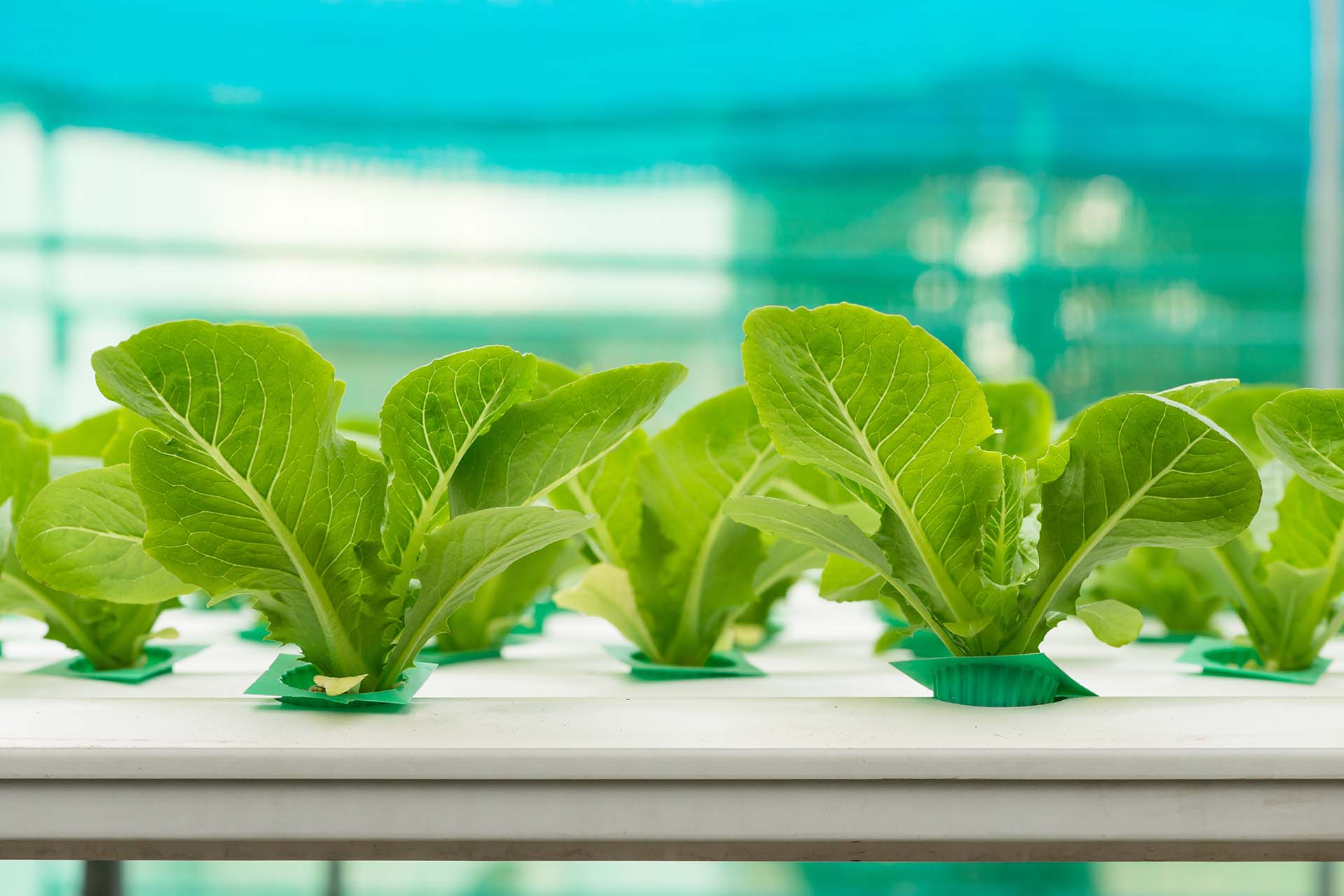 About Hydroponics and Aquaponics - uPONICs, Hydroponics and