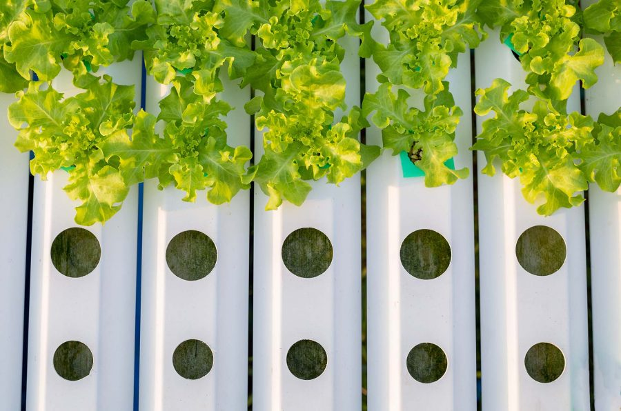 Hydroponics Systems [Buying Guide: Which Hydroponic System