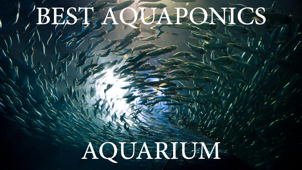 Aquaponics Aquarium Reviews (Best DIY Home Aquaponics) on small home aquaculture, small grow kits, small home farm, small home growing, small home composting, small home community, small home orchard, small home design, small home homesteading, small home products, small home gardening, small home water purification, small home ponds, small home technology, small home diy, small home solar power, small home architecture, small home sustainable development, small home nursery, small home aquarium,