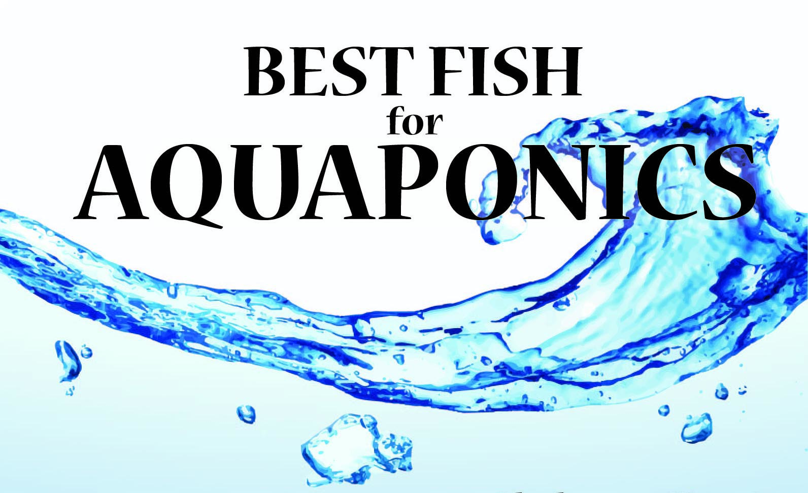 types of fish for aquaponics