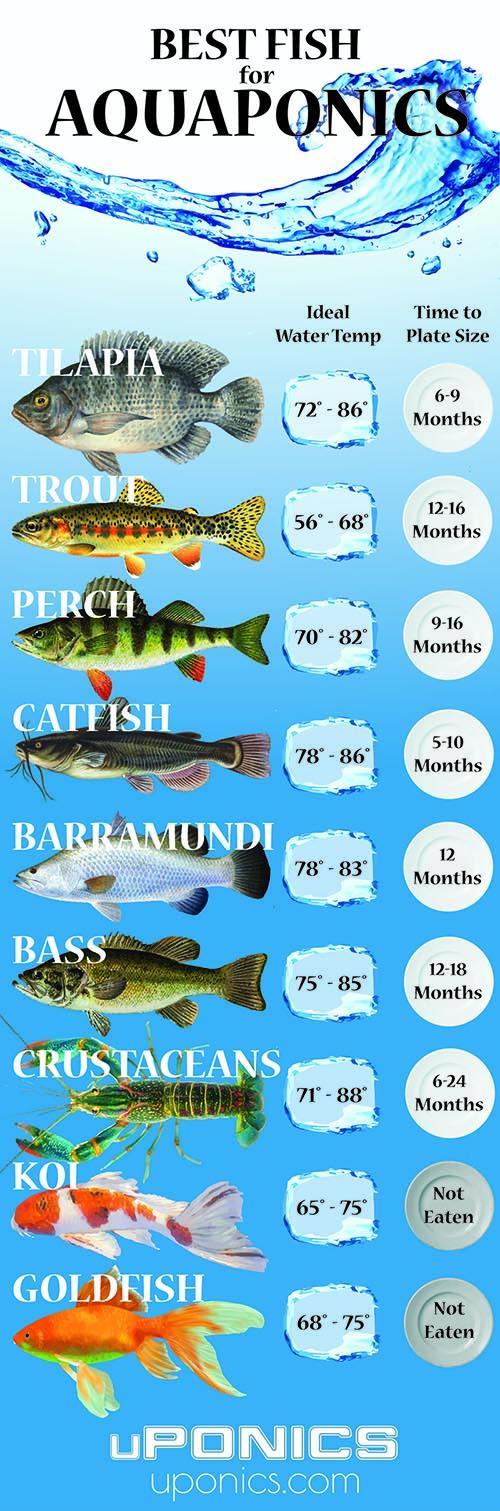 Aquaponics Fish (Best Species for Aquaponics)