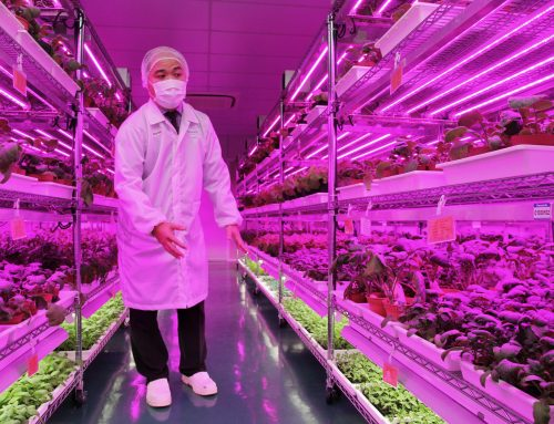 Panasonic Ventures Into Vertical Farming