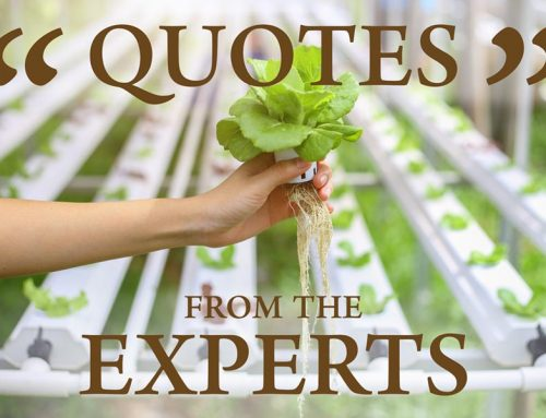 Quotes From The Experts