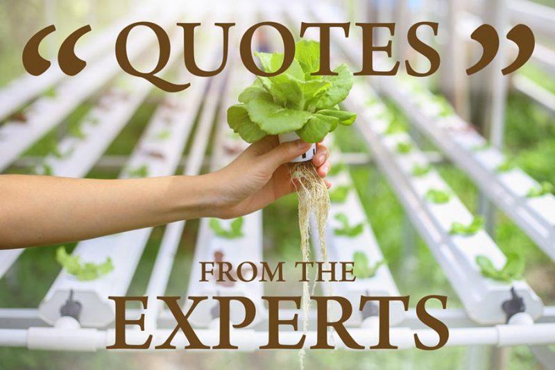 what is hydroponics