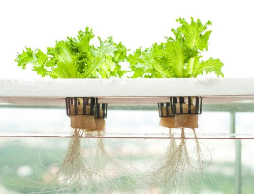 The Kratky Method of Hydroponics